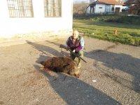 LS Stubal - odstrel 22.12.2013. Gvozdenović Stanoja, vepar 60 kg bez utrobe i glave